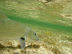 Bonefish Flat