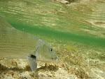 Bonefish Flat