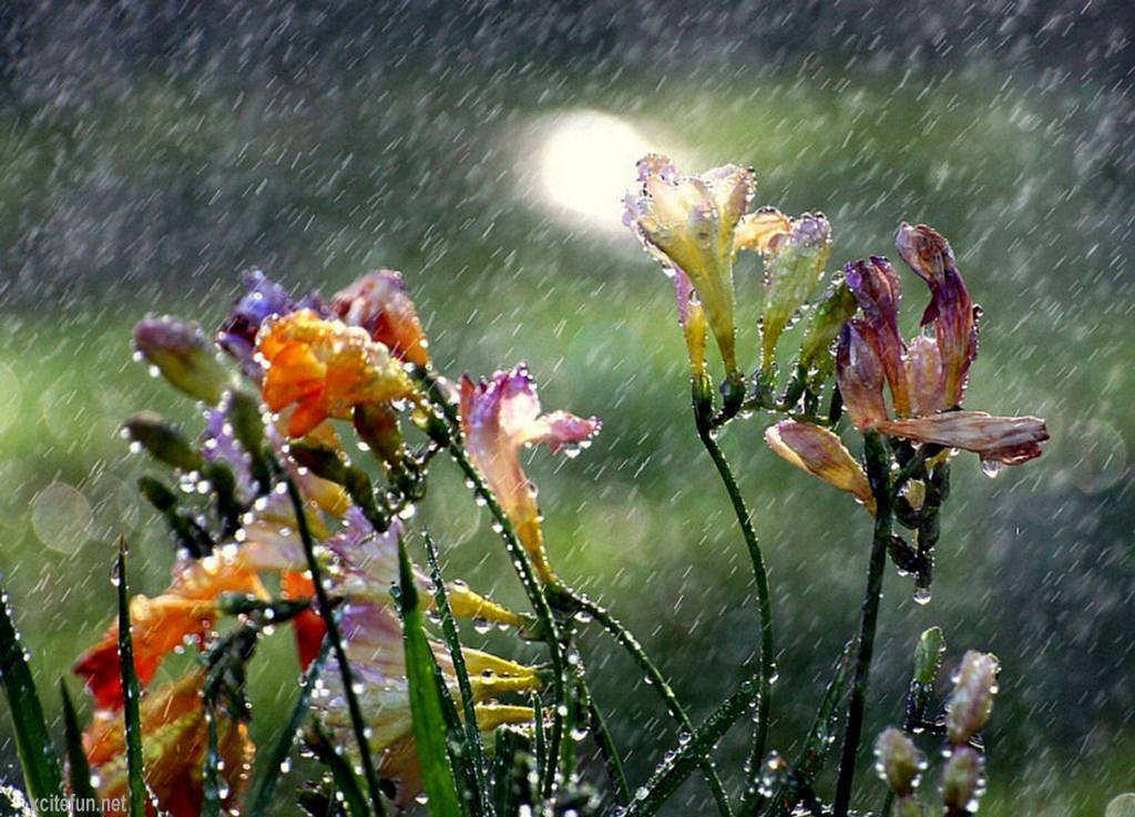 Kisa - Page 4 Beauty+In+Rain+-+Romantic+Moments+%25282%2529