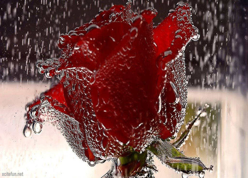 the romantic in the rain g Warning: romantic rain contains adult humor intended for adult audiences romantic rain is jason flick's newest.