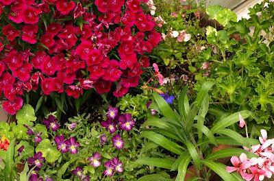 Garden 09 - June