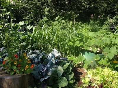Garden 8-1-09