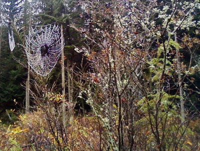spiderweb at beaver pond