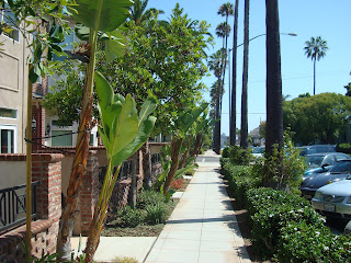 Side walk surrounded by palm trees and shrubs