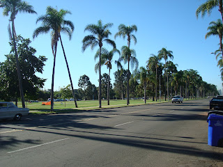 Road in Balboa Park lined with palm trees