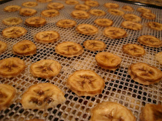 Finished dehydrated banana slices on dehydrator tray
