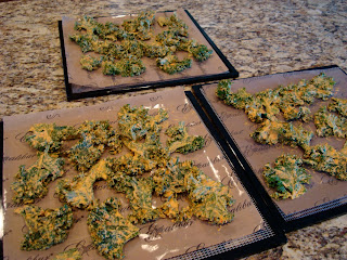 Raw Kale chips on dehydrator tray