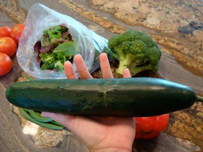 Large Cucumber