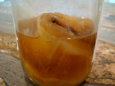 Close up of Scoby in jar