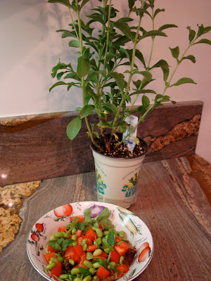 Edamame Salad with Stevia leaves from the Stevia Plant behind bowl