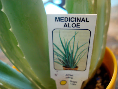 Label in plant that says Medicinal Aloe