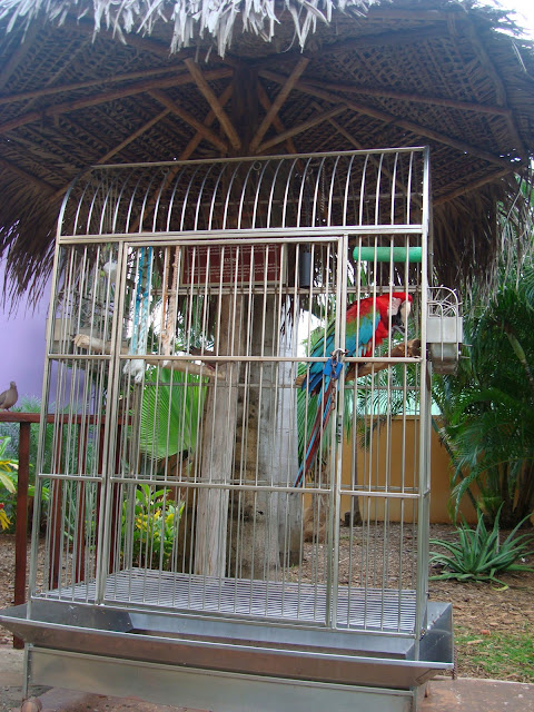 Cage with parrot inside