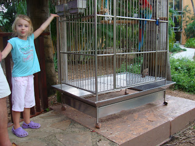 Little girl standing by parrot in cage