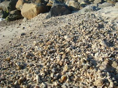 Close up of seashells on beach