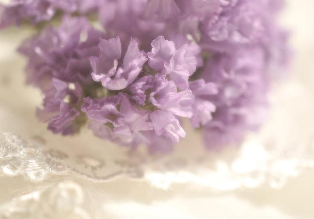 the shabby tea room week 35 39 lavender lace 39. Black Bedroom Furniture Sets. Home Design Ideas