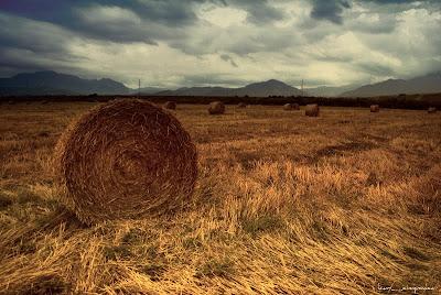 baloti_ de_ paie-straw_bales-balas_de_paja-Strohballen-δέματα άχυρου