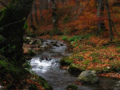 Toamna-Autumn-Herbst-Otoño-Φθινόπωρο