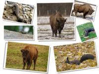 Animale/Animals/Tiere/Ζώα/Animais/Animales/Vadállatok