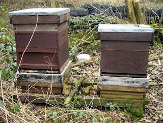 Two National beehives