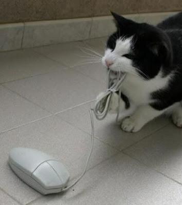 imagens de gatos tecnologicos