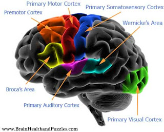 What Part Of The Brain Stores Memory >> The Brain Store House Of Memory Part Iv Elixir Of Knowledge