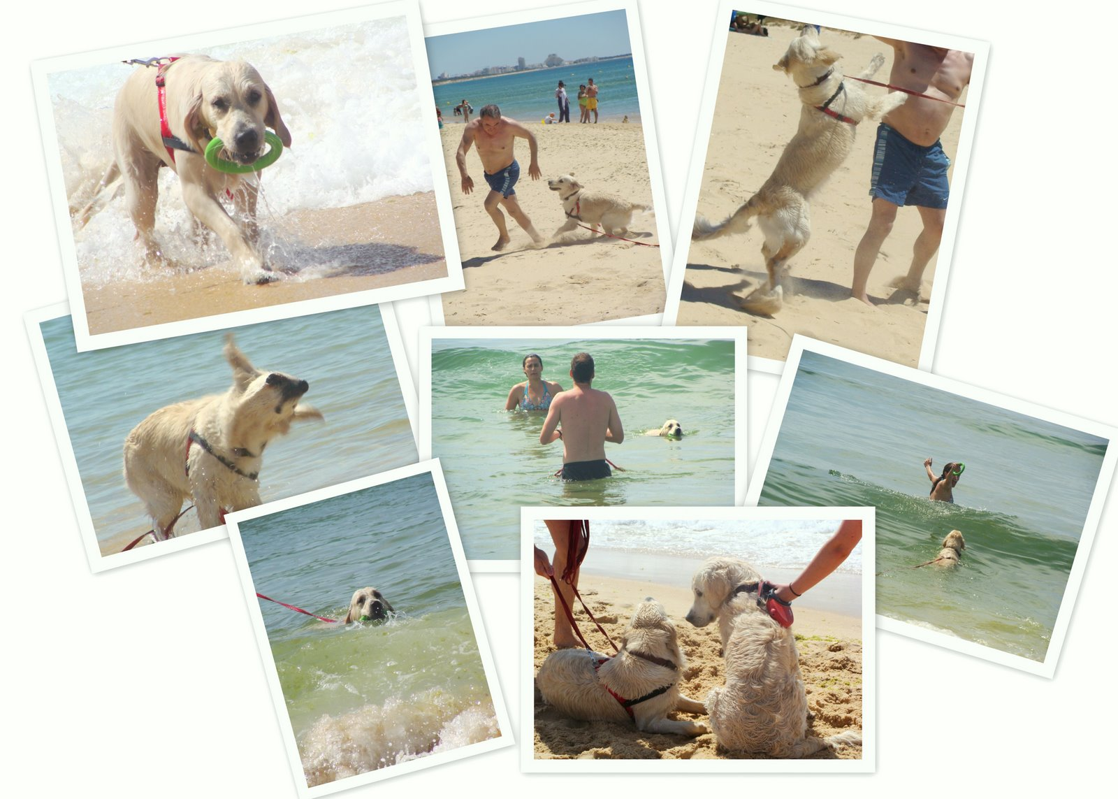 [Collage+Algarve+beach+2009]