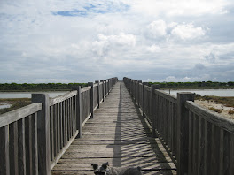 Puentes tendidos hacia las nubes