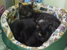 Fígaro e Elvira