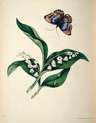 Lirios y mariposa