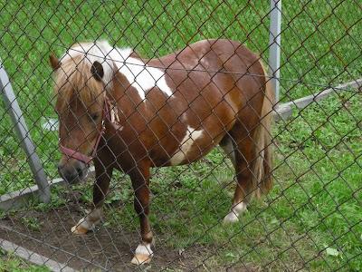Kuc, konie