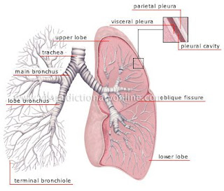 CasesBlog - Medical and Health Blog: Free Visual Dictionary of ...