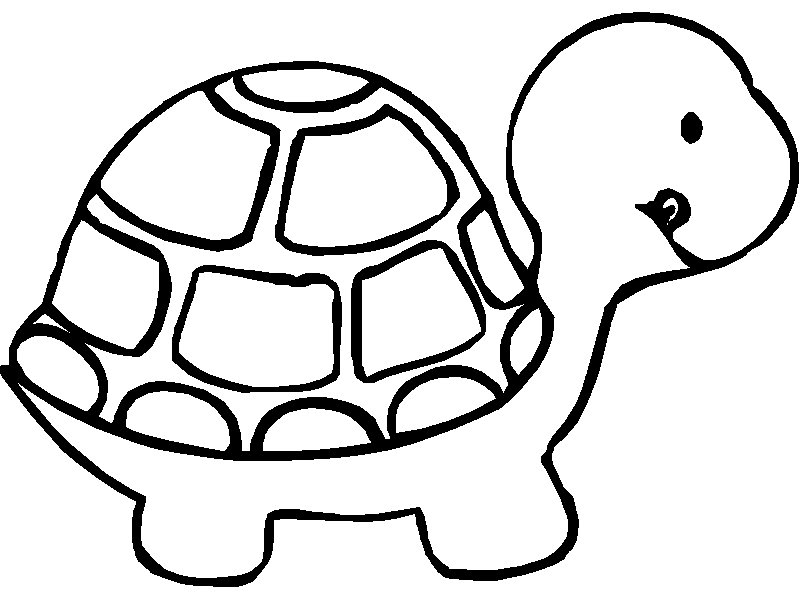 Free Printable ANimal Turtle Coloring Pages