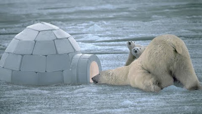funny Polar Bear taking a peak in an igloo
