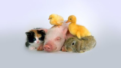 cute kitten, young Rabbit, and baby chicks sitting on baby pig