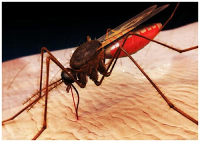 mosquito_997039116.jpg