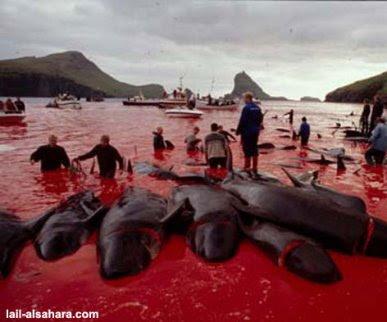 http://1.bp.blogspot.com/_LadJ1KLjTkQ/SkpzD39JWDI/AAAAAAAAAnQ/41E54zqe9QI/s400/matanza-delfines-dinamarca.bmp