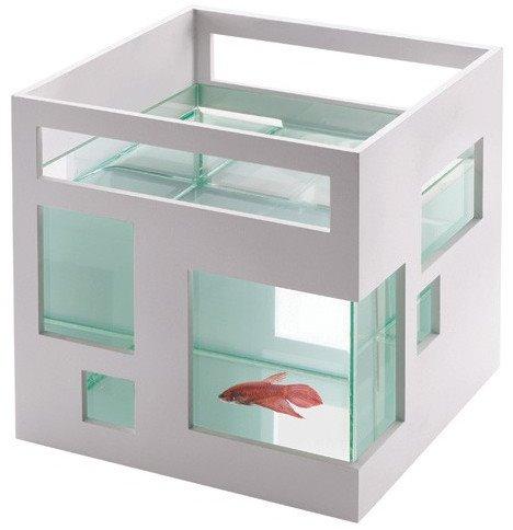goldfish tank size. Architectural Goldfish Tank