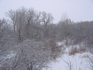 Wintery scene along the nature trail