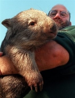 [Wombat+in+Man]