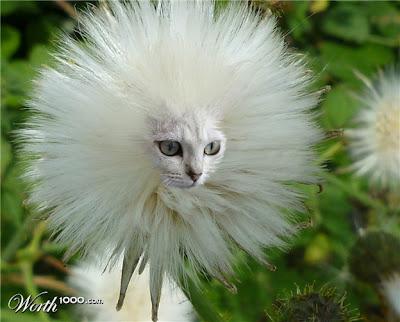photoshop animal