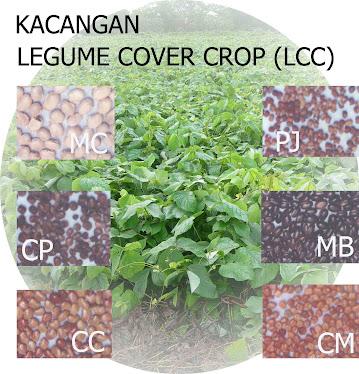 Legum Cover Crop