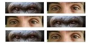 Evrimsel Psikoloji Bölümleri
