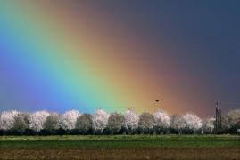 Rainbow*