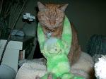 Kuba cat