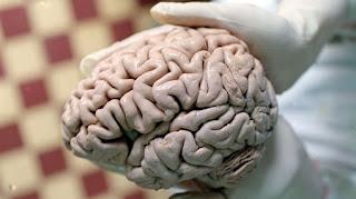 """Científicos hallaron neuronas """"Facebook"""" en el cerebro"""