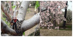 Esta primavera, muero