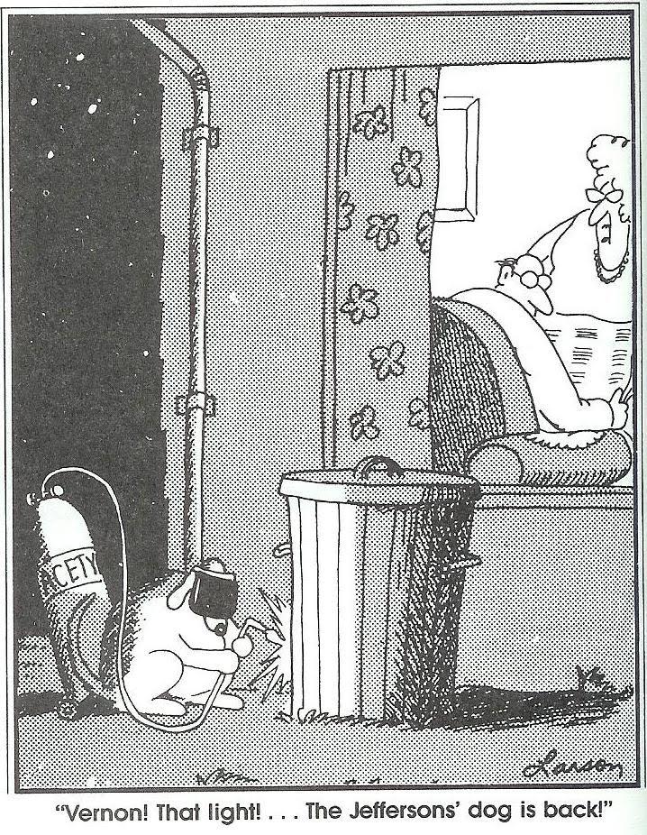 Cat Vs Dog Farside