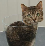 Smallest Cat In The World Guinness 2012 smallest cat in the world guinness 2012 this is a 171 inch tall