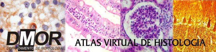 Atlas Virtual de Histologia