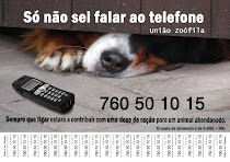 CÃES E GATOS ABANDONADOS